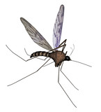 Mosquito, poster
