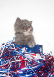 Fourth of July Kitten poster