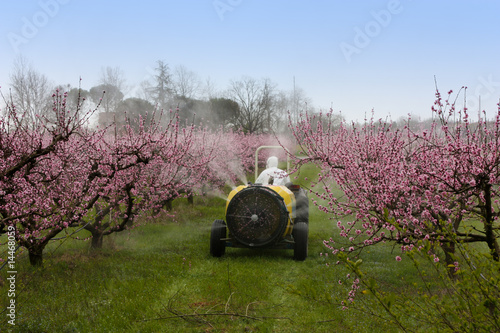 spraying of peach