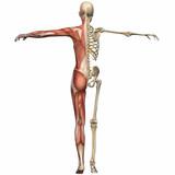 Fototapety Weiblich Anatomischer Körper