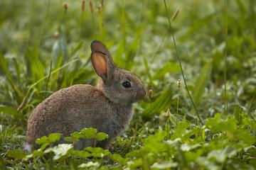 Coniglio fiuta la erba foto1 della serie coniglio mangia