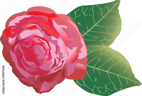 single red rose illustration