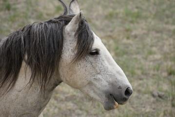 Pferdkopf