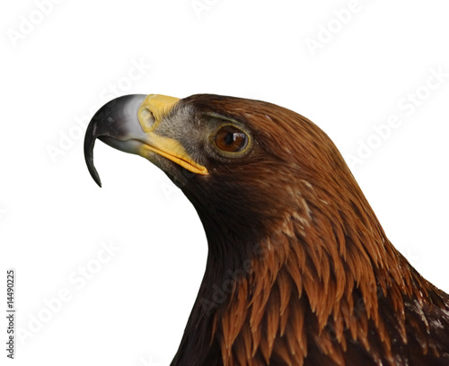 Eagle head isolated