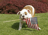 Yankee Doodle Doggie poster