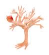 Human hands tree holding apple