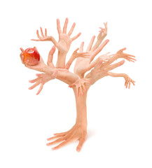 Human hands tree holding apple