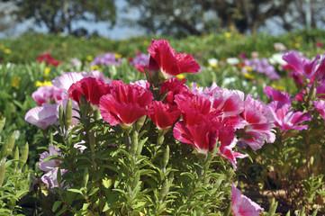 Israeli wild flowers
