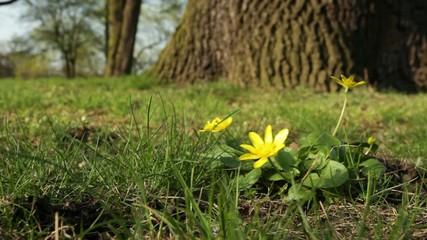 Blume & Wind