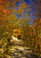 Mountain path in autumn in np paklenica