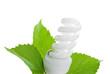 ampoule fluorescente et feuille verte sur fond blanc