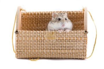 Small hamster in present package.