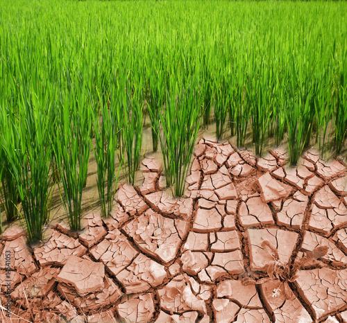Fotobehang Droogte OGM