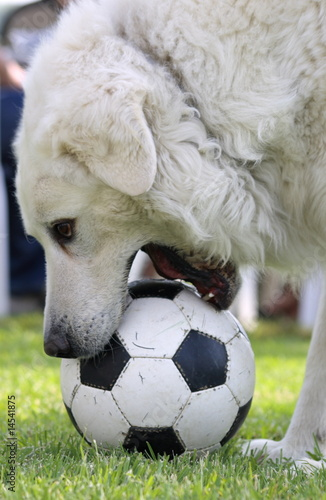 ball and dog