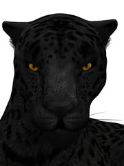 Black jaguar isolated on white.