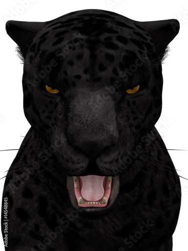Black roaring jaguar isolated on white.