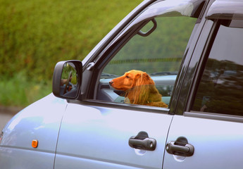 a dog in the passenger seat