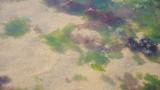 Algues Marines poster