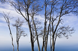 Trees by Lake Superior poster