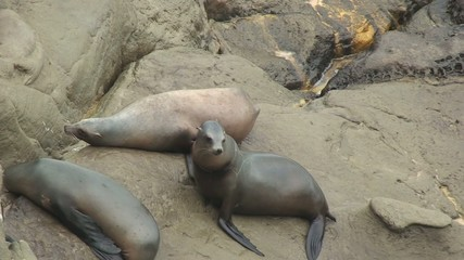 Multiple Seals on Rocks Next to Ocean