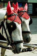 Zwei Pferdeköpfe mit abgedeckten Ohren