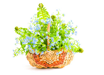 Bouquet of forget-me-nots in a wattled basket