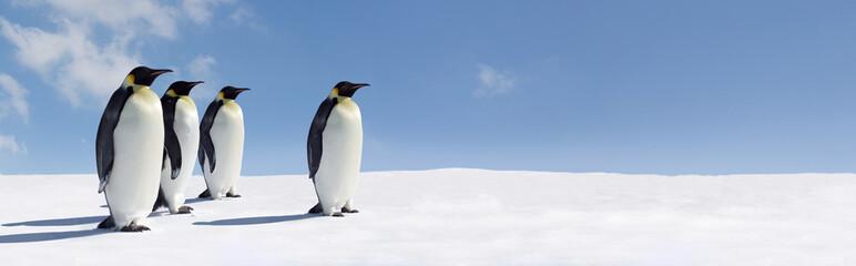 Penguin Panorama