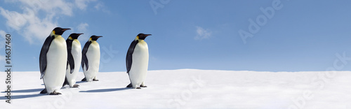 Penguin Panorama - 14637460