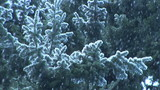 Snow Falling on evergreens, slow motion poster