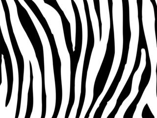 Zebra Textur 03