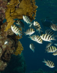 Coral, fishes and snorkeling women