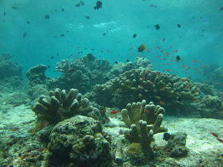 Corals - Sipadan - Diving