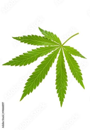 Fotobehang Planten hemp leaf