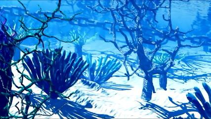 Swimming on reef