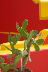 Mur coloré et cactus,TUCSON,ARIZONA_USA