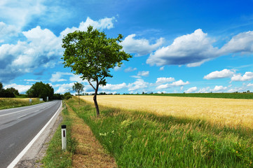 Empty countryside road among trees and fields at summer day