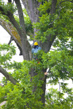 Brave Tree Cutter Trimmer poster