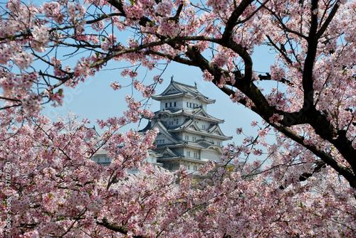 Foto op Plexiglas Japan Himeji Castle during cherry blossom