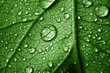 beautiful leaf with drops
