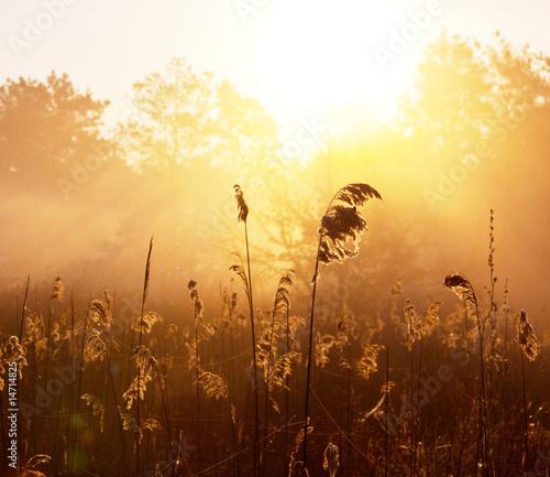 obraz lub plakat Misty lake