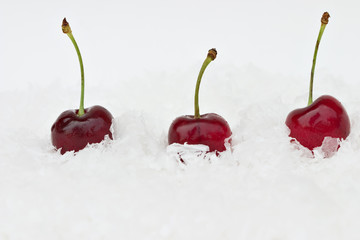 Three black cherries in the snow