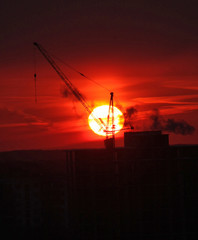 The crane on fire of the sun
