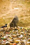 Swine in Trash poster