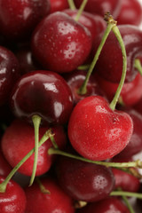 pile of fresh cherries with water drops