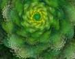 Fototapeten,fraktal,baum,sturm,spirale