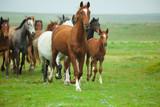 Fototapeta Horses Running