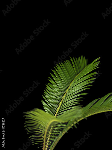 Green Palm Leaves on Black Background 2