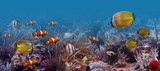 Underwater world-