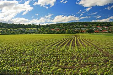 Maisfeld mit Dorf