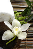 White orchid in a spa - 14759857